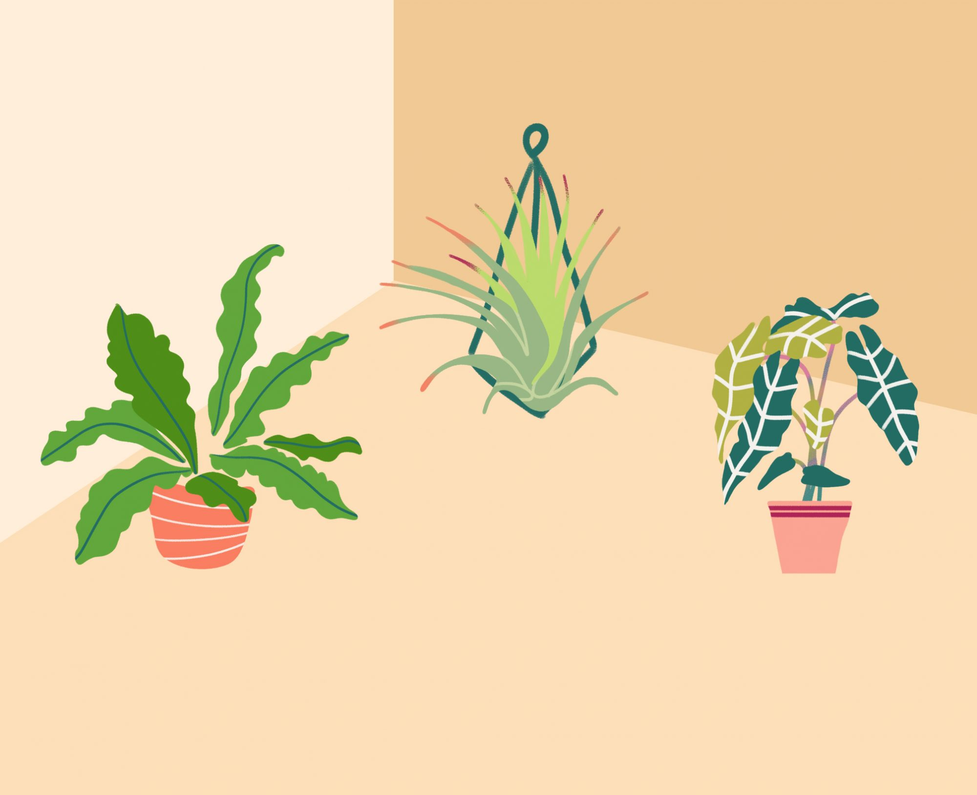 The Surprising Health Benefits of House Plants