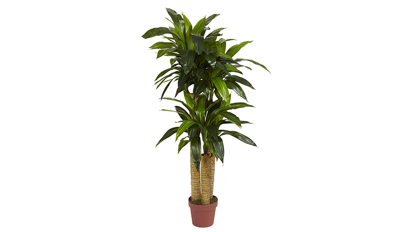 Dracaena Decorative Silk Plant