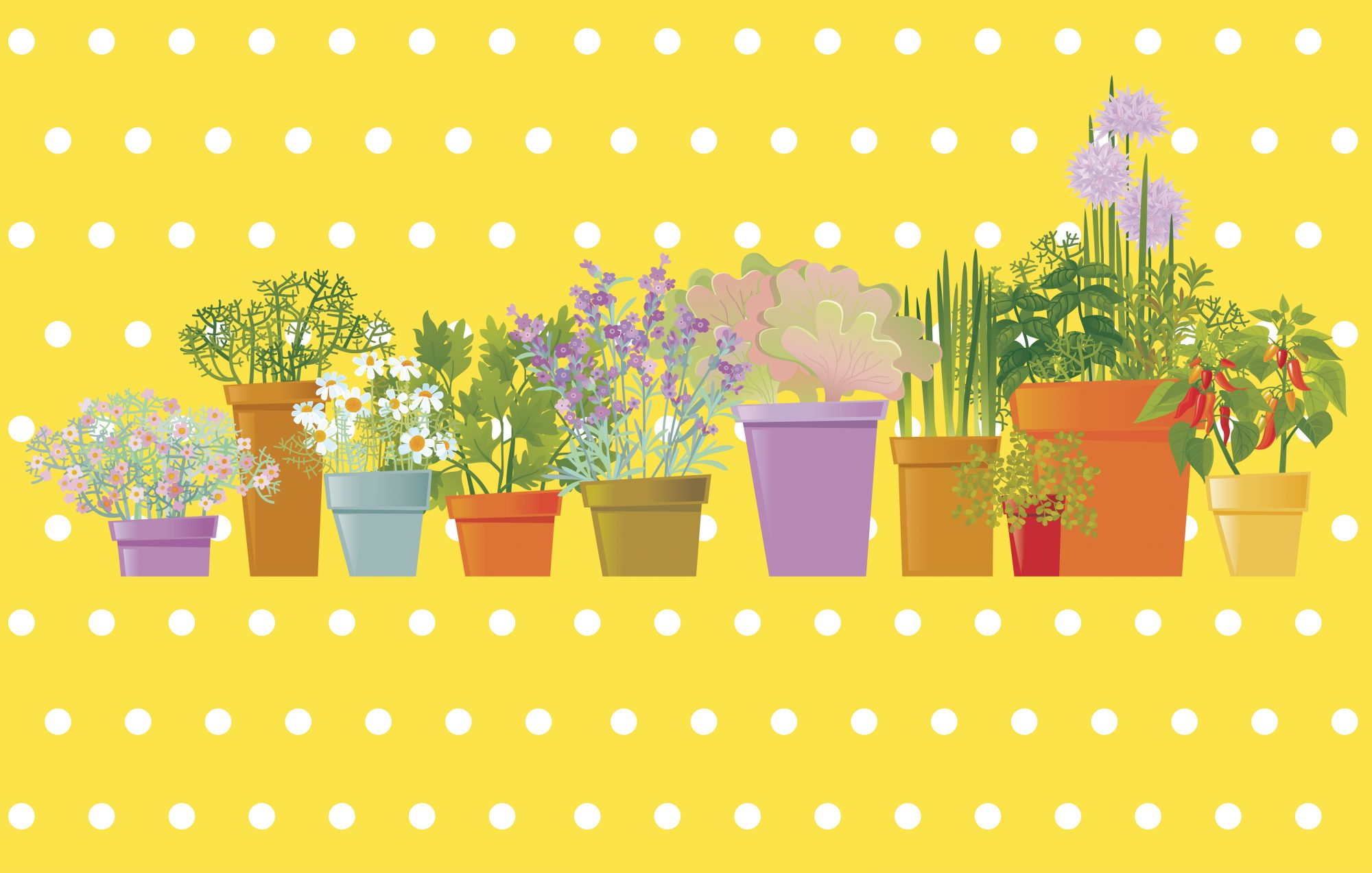 Things to Consider Before Buying Plants at the Nursery, illustrated plants