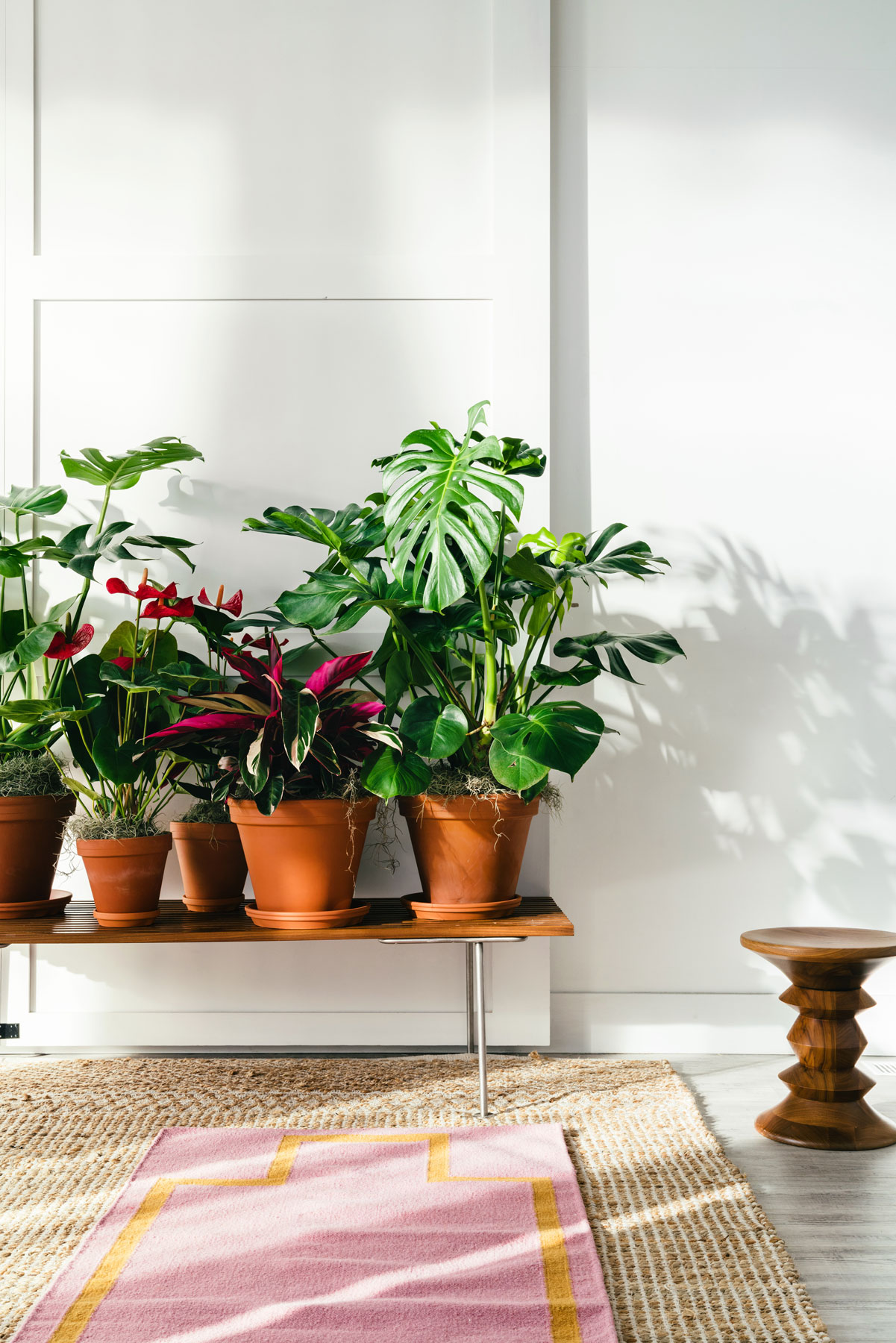 Pretty indoor plants from Bloomscape