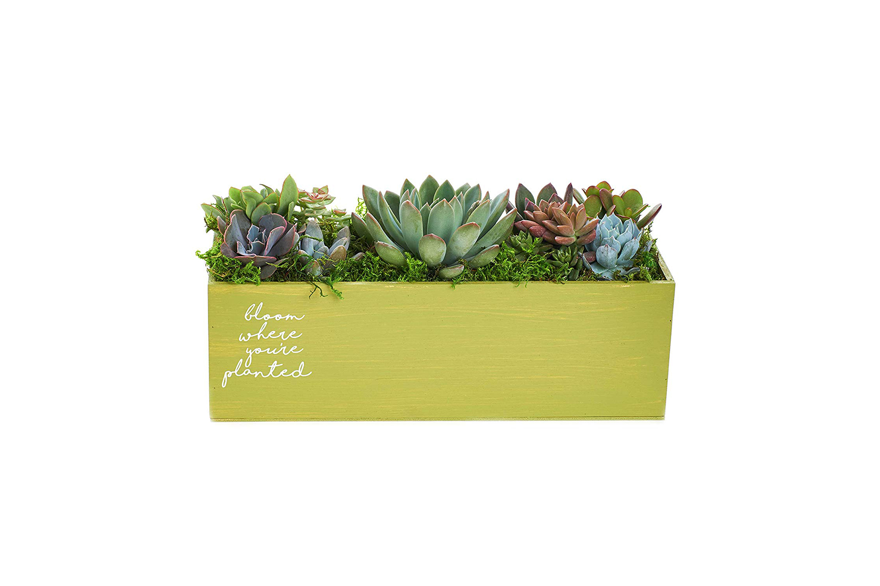 Bloom Where You Are Planted Spring Planter for Easter
