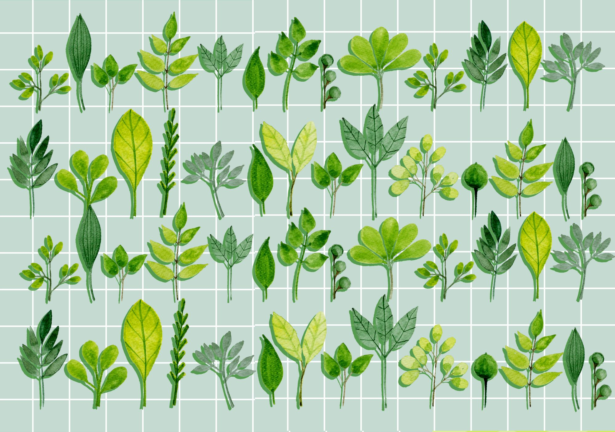The Easiest Herbs to Grow Indoors