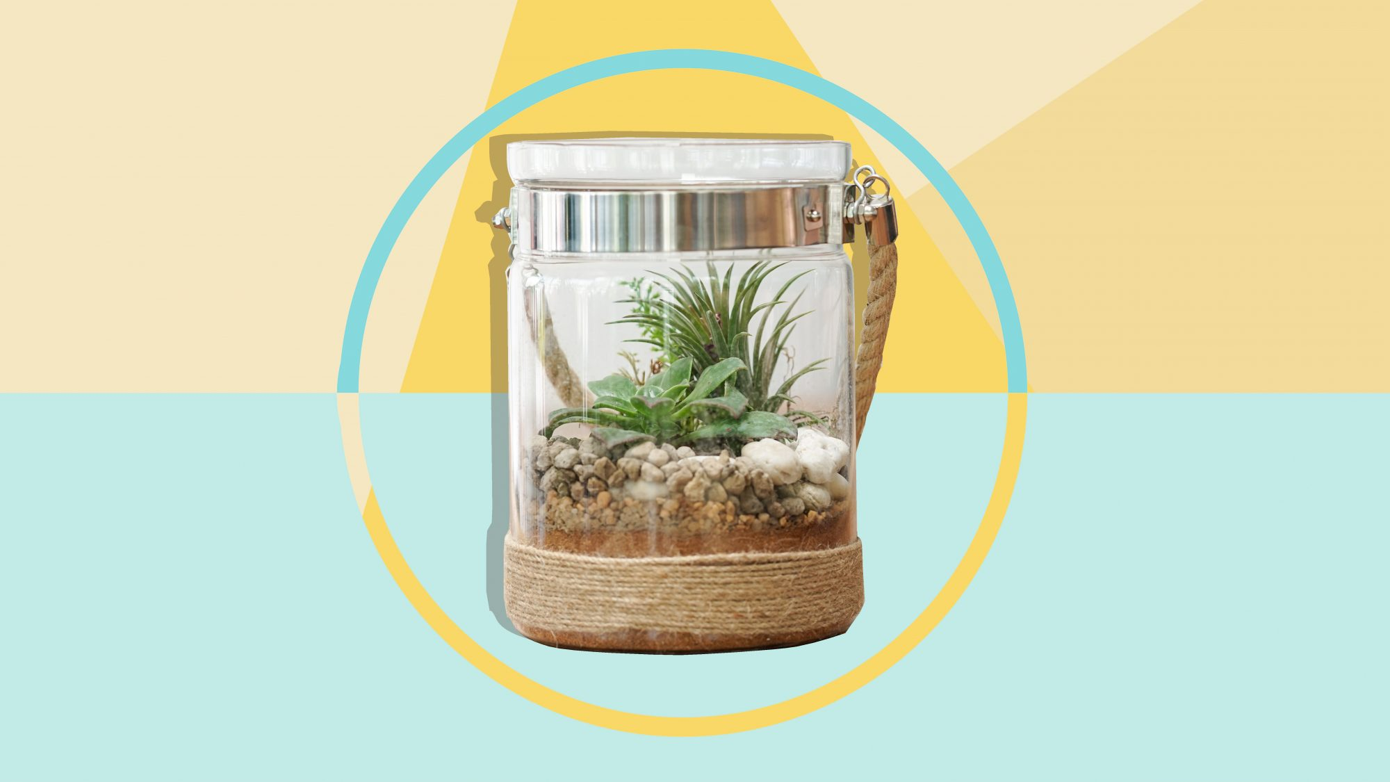 Air Plant Care Tips