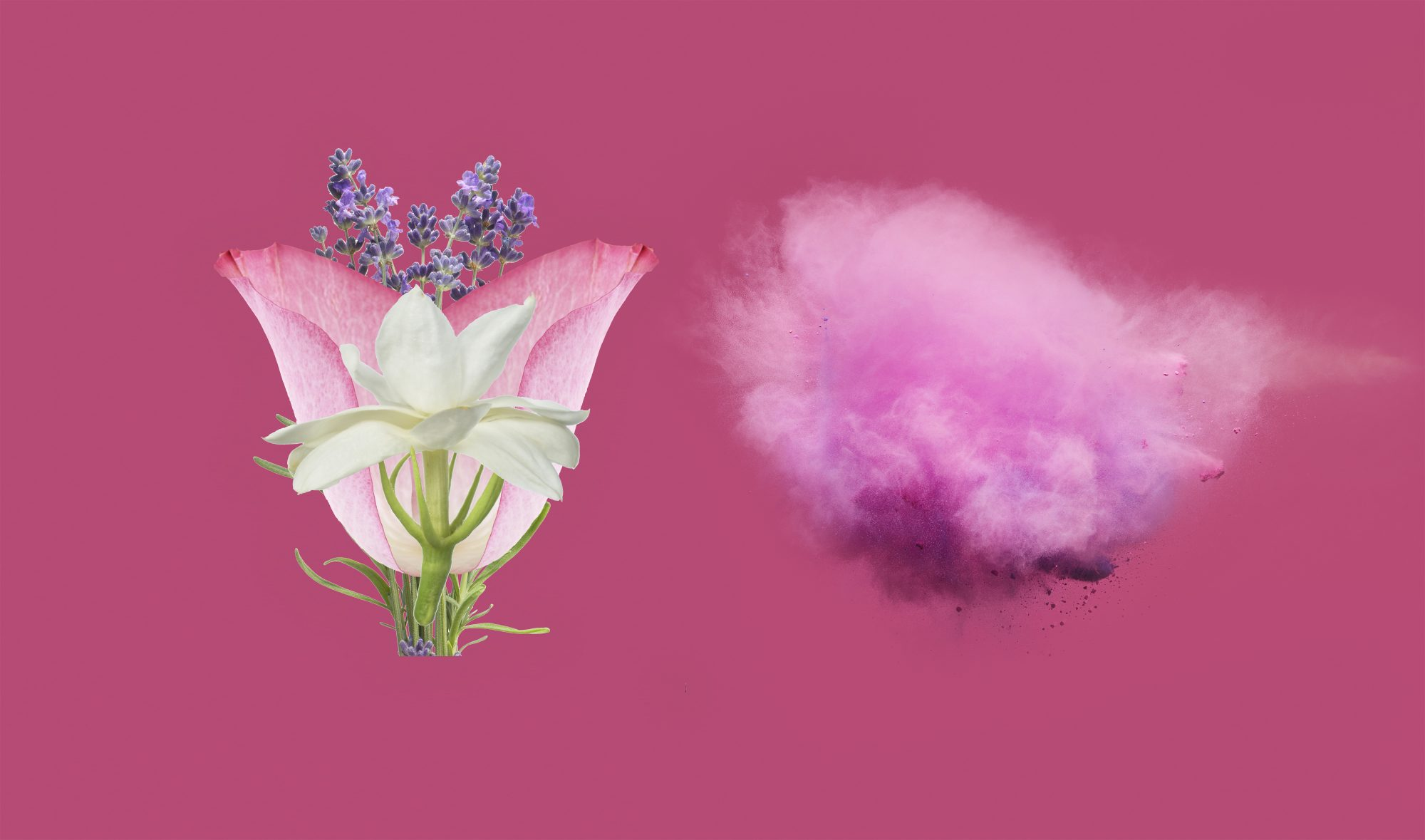 7 Fragrant Flowers That Make a Garden (Or Bouquet) Smell Amazing
