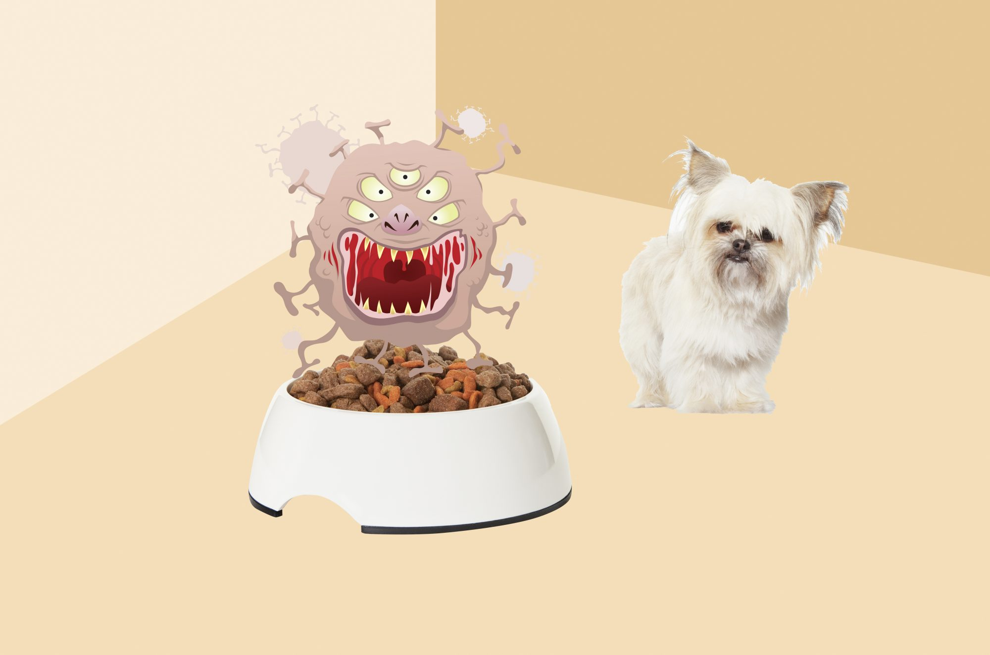Things You Should Disinfect Around Your Home, dog with water bowl