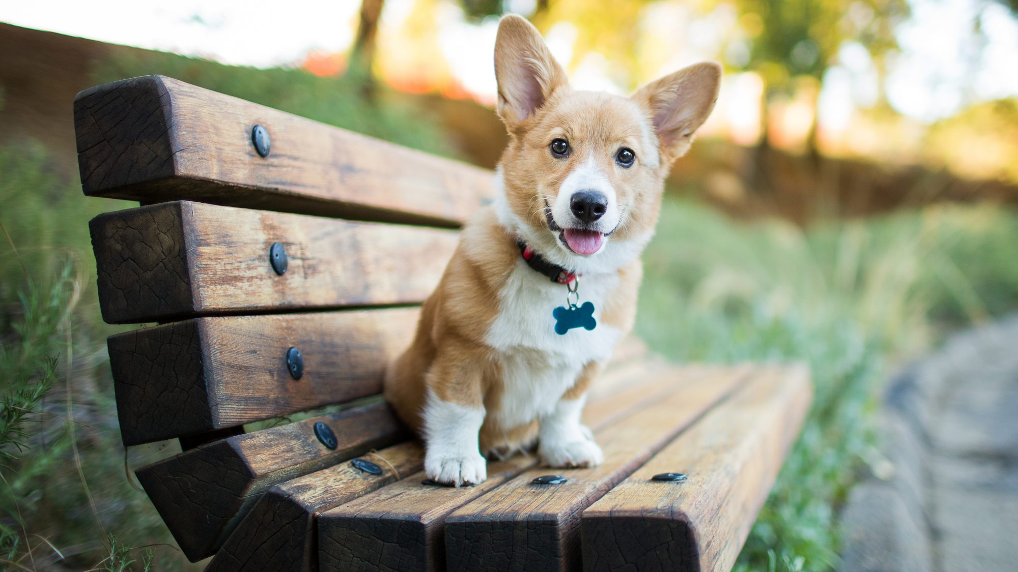 Cute dog sitting on a bench - top dog names and cat names