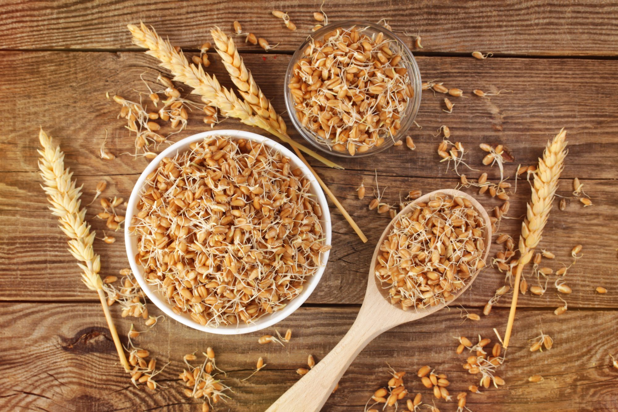 sprouted-grains-wheat