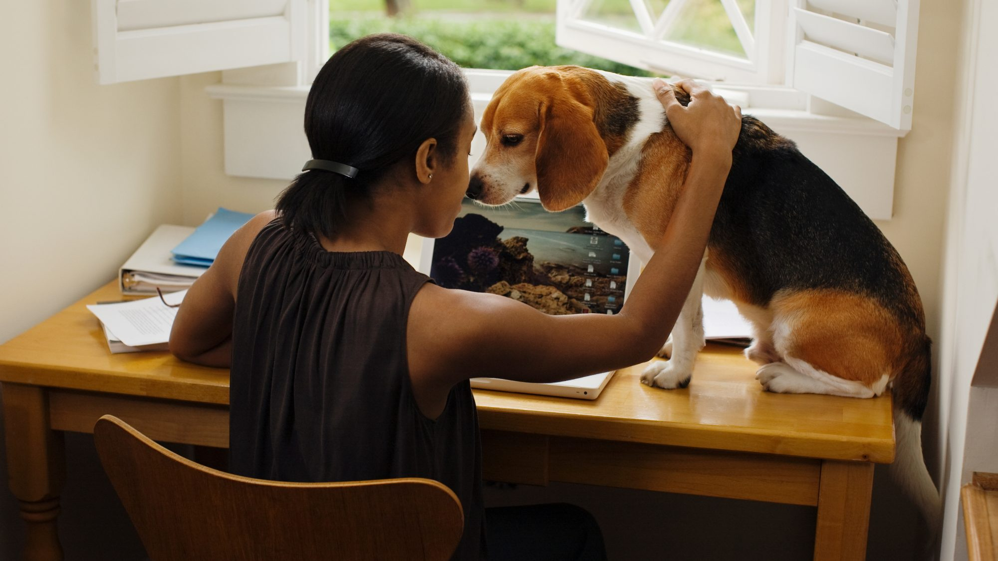 woman at desk with foster dog and laptop: how to volunteer from home