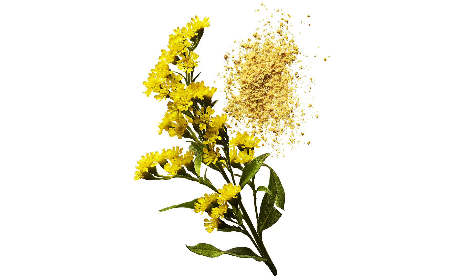 Yellow flowers and pollen