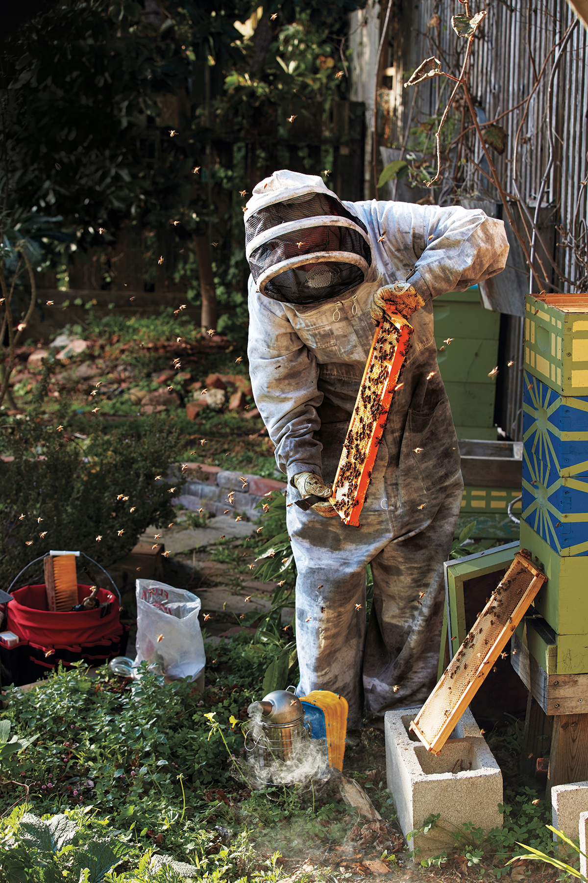Gigi Trabant pulls out a frame of bees from her hives