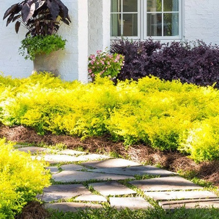 Outdoor Plants That Will Add Color To