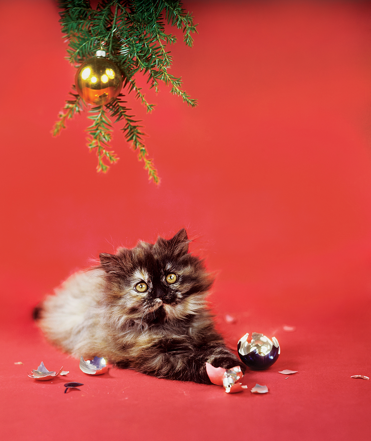 Cat with broken Christmas ornament