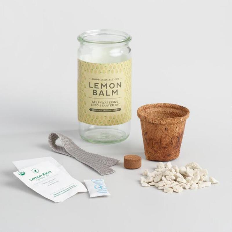 Modern Sprout Cocktail Seed Starter Kit
