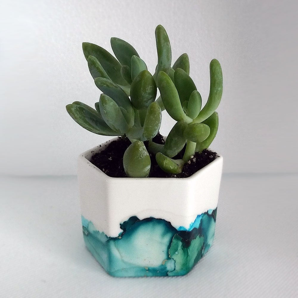 Watercolor planter with succulent