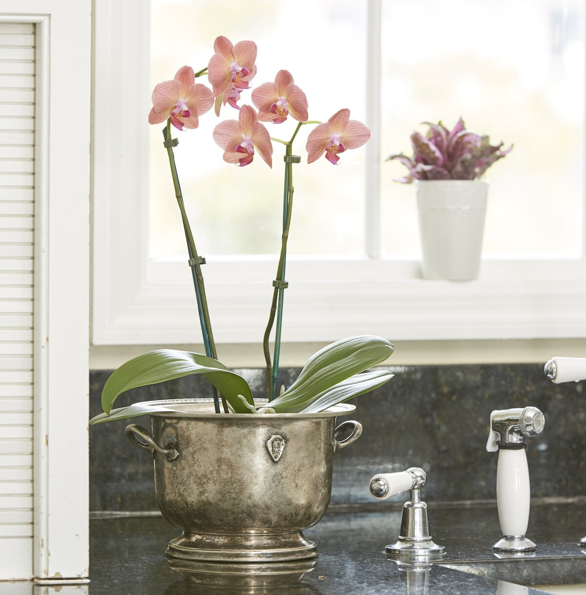 Easy Houseplants, Moth Orchid on Side Table