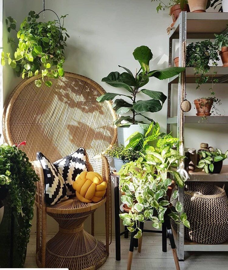 Gen-Z Yellow knot pillow on rattan chair, with plants