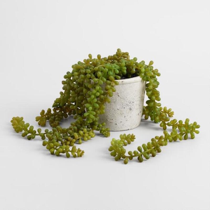 Fake string of pearls plant