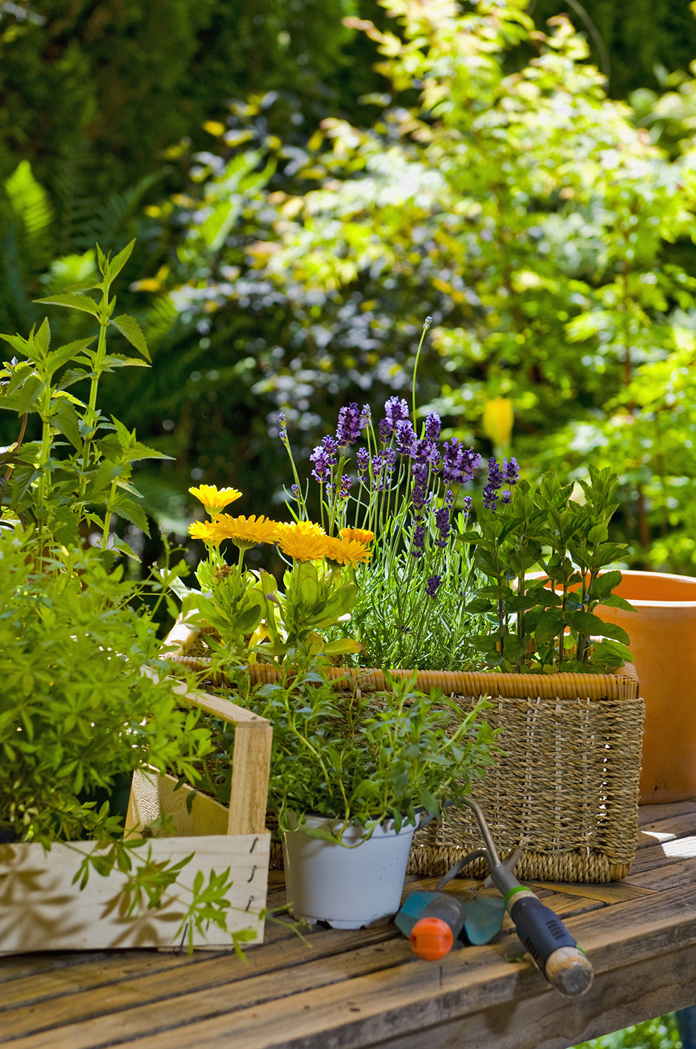 Flowers and gardening tools