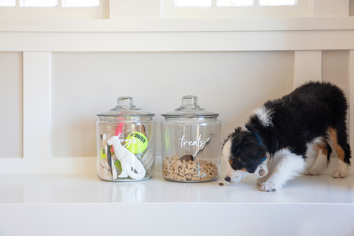 Puppy eating food next to storage containers