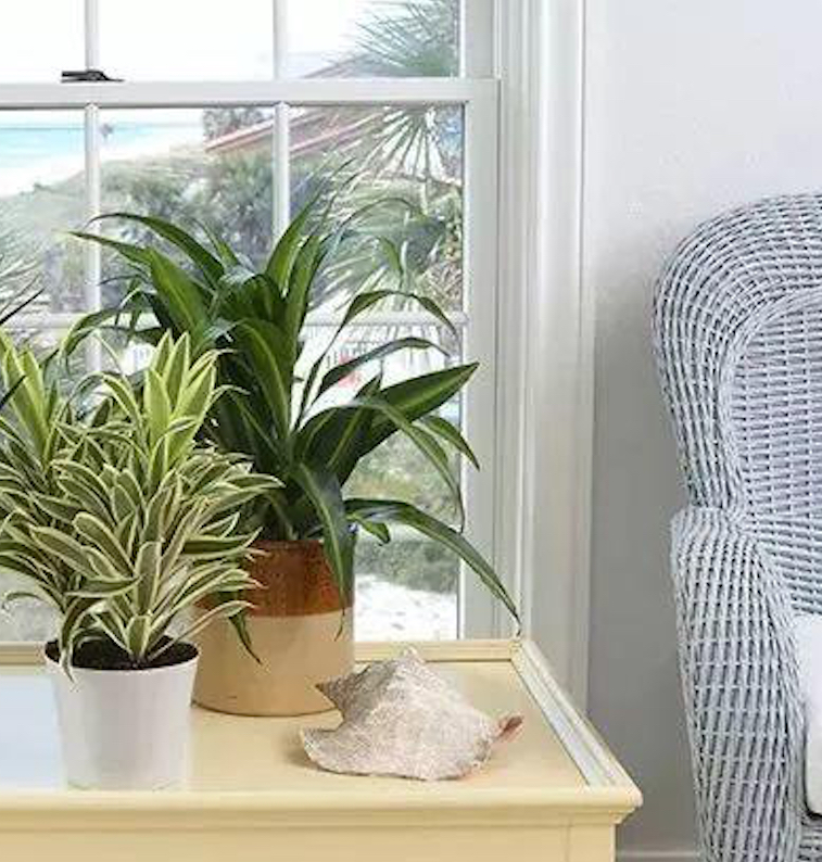 Plants That Clean the Air, Dracaena