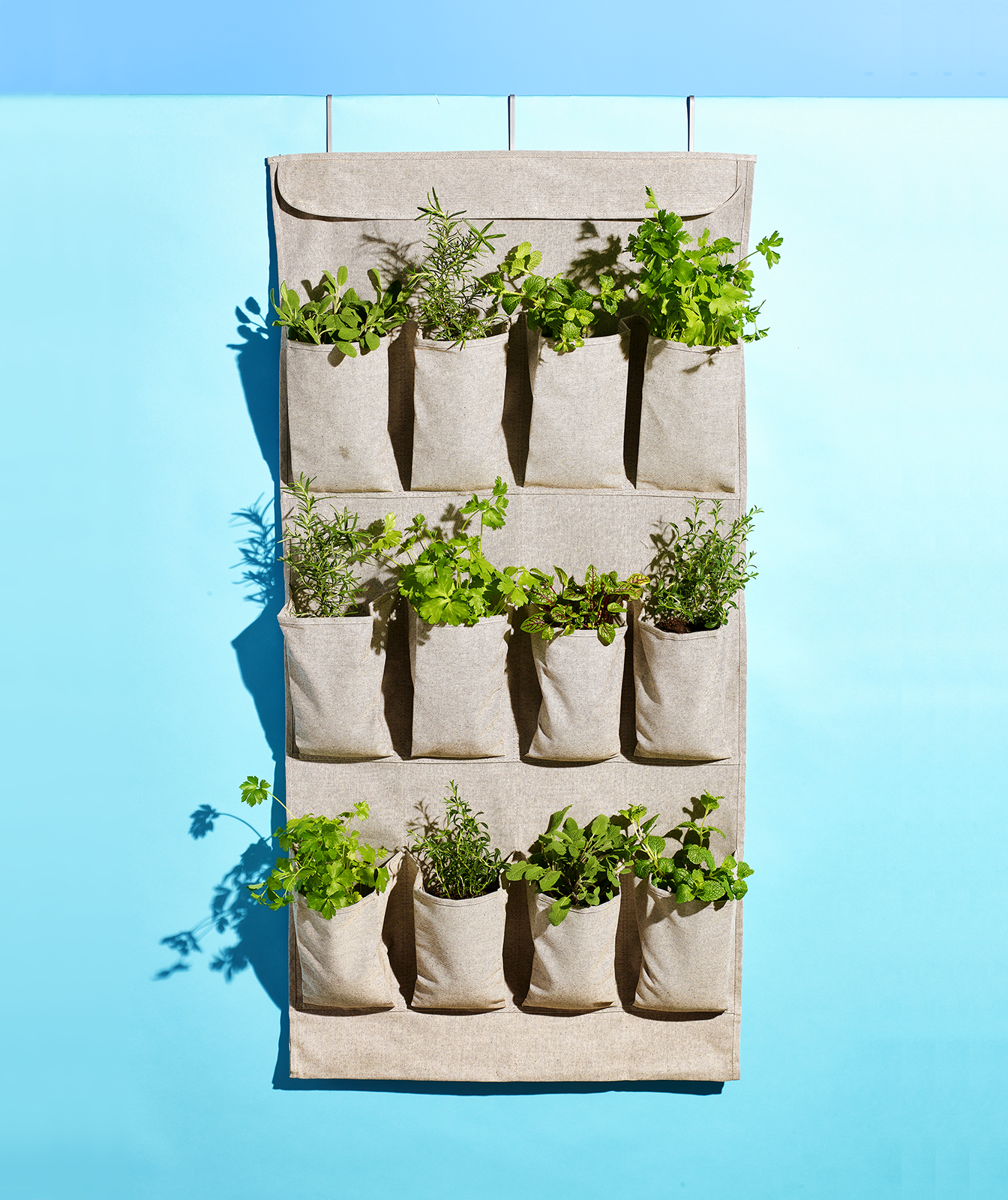 Shoe Organizer as Vertical Garden