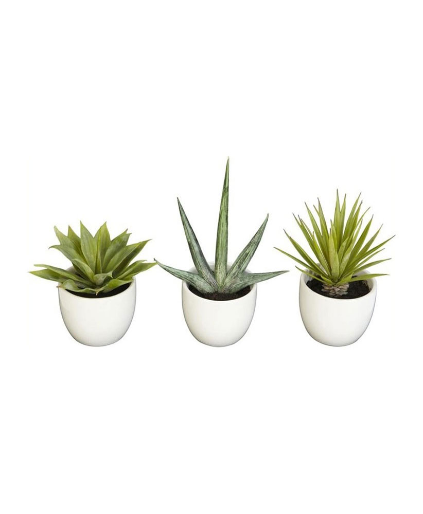 Succulent Collection, Set of 3