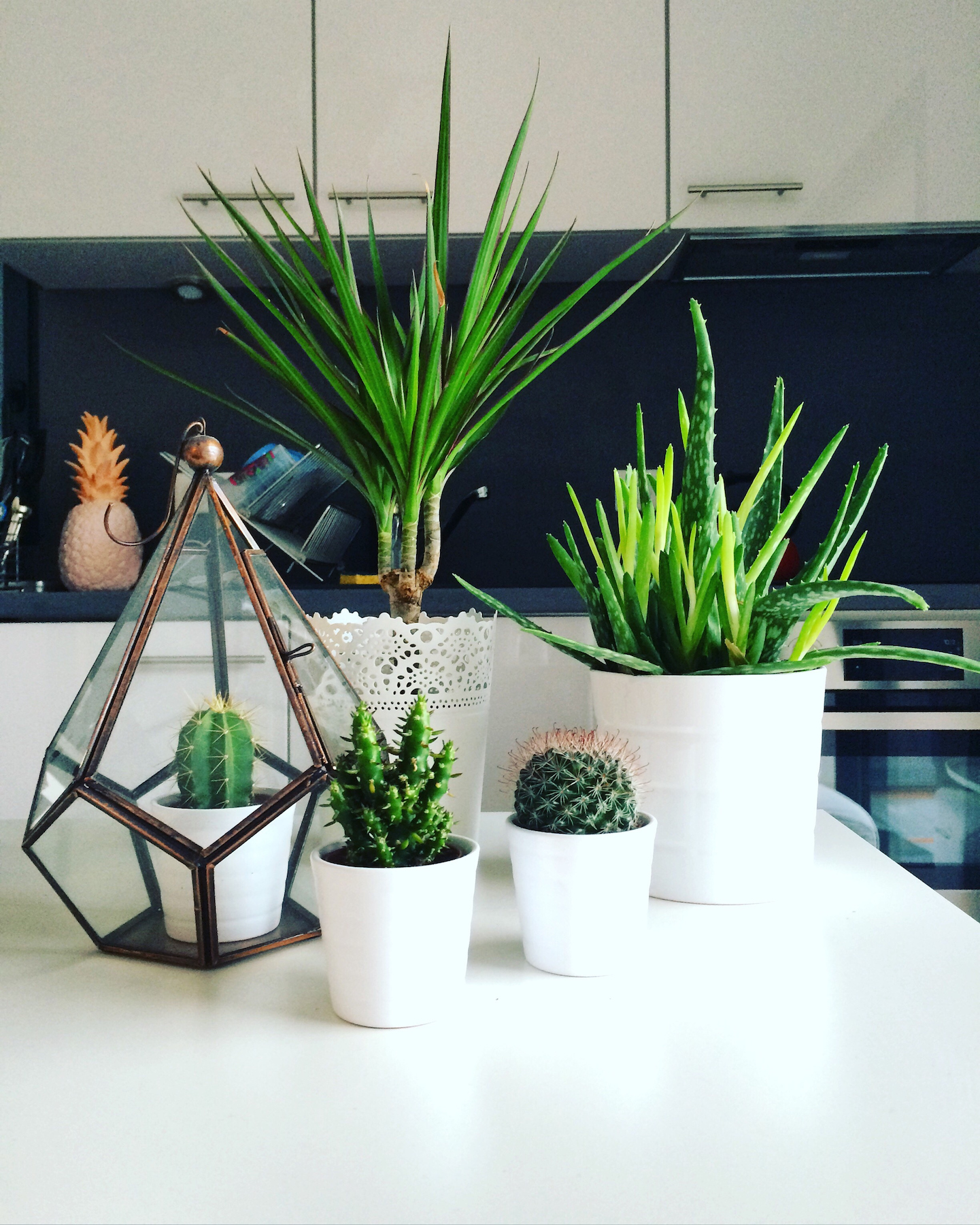 Succulents grouped on kitchen table