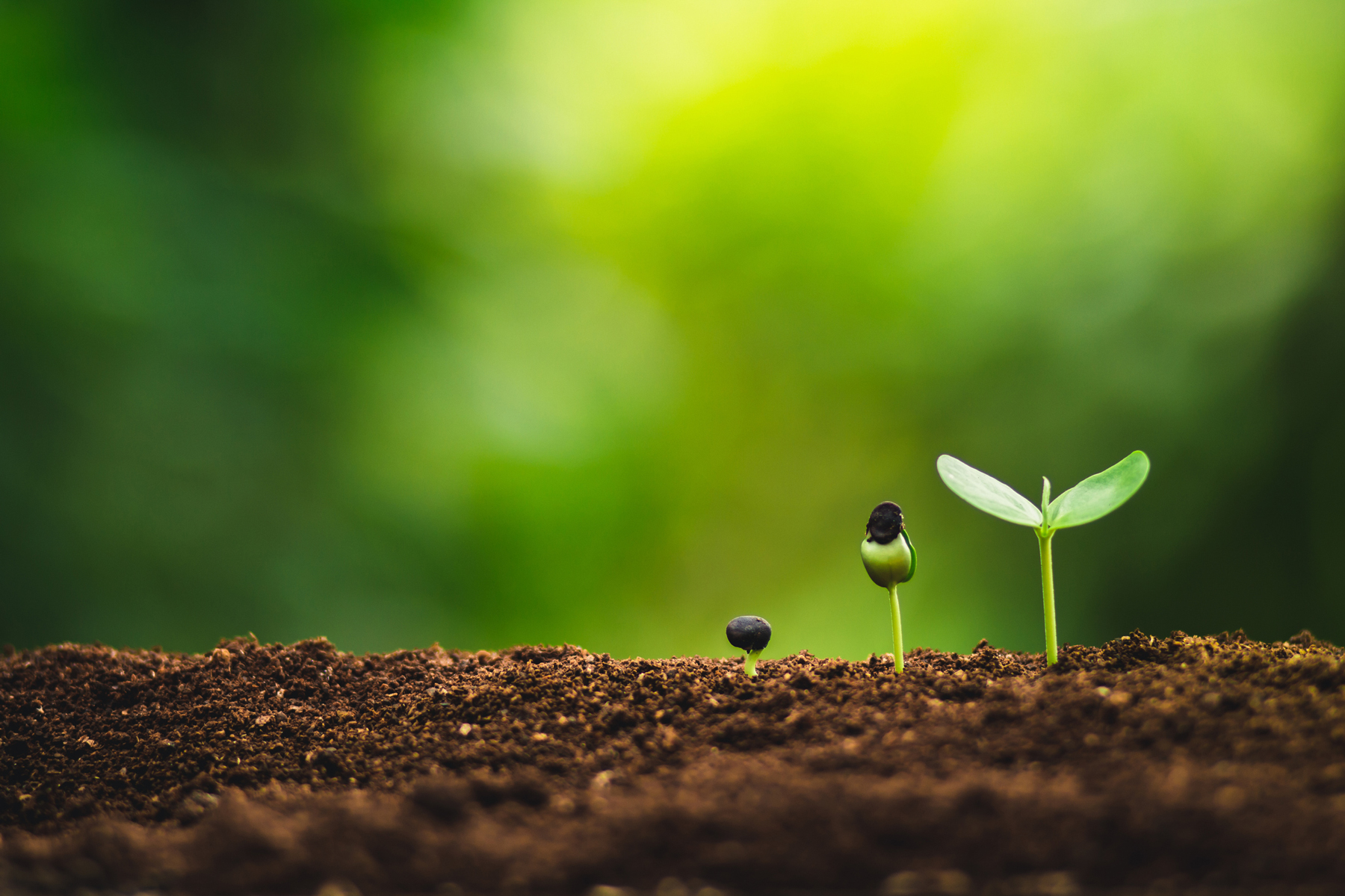Sustainable gardening tips - sprouts growing in dirt
