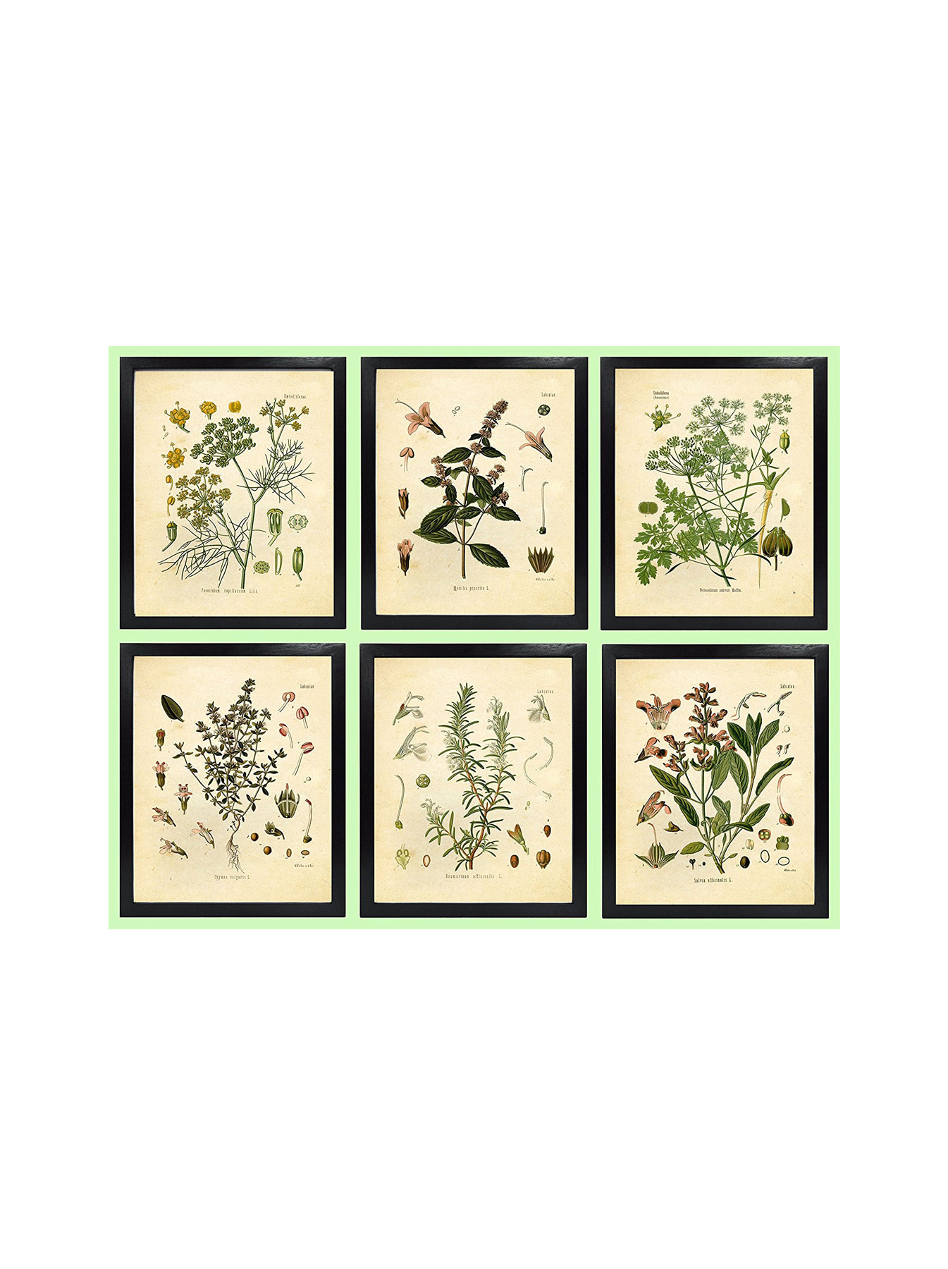 Ink Inc. Set of 6 Herb Botanical Prints