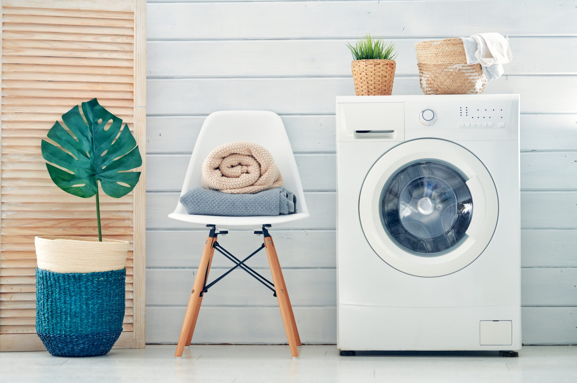 washing machine and plant in laundry room