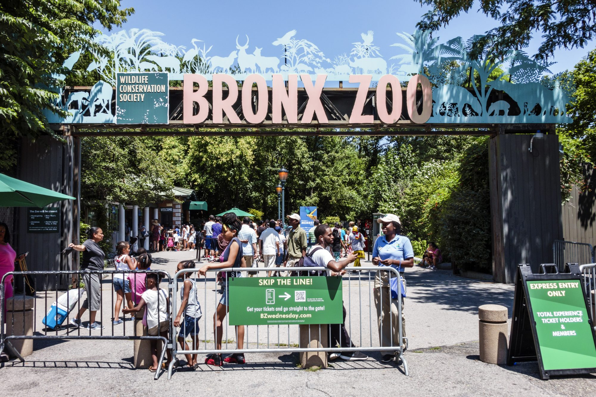 Virtual summer camps - 2020 online virtual summer camp ideas (Bronx Zoo)