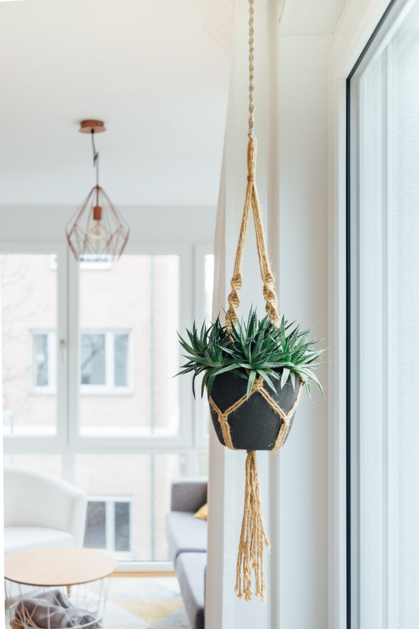 hanging plant in living room