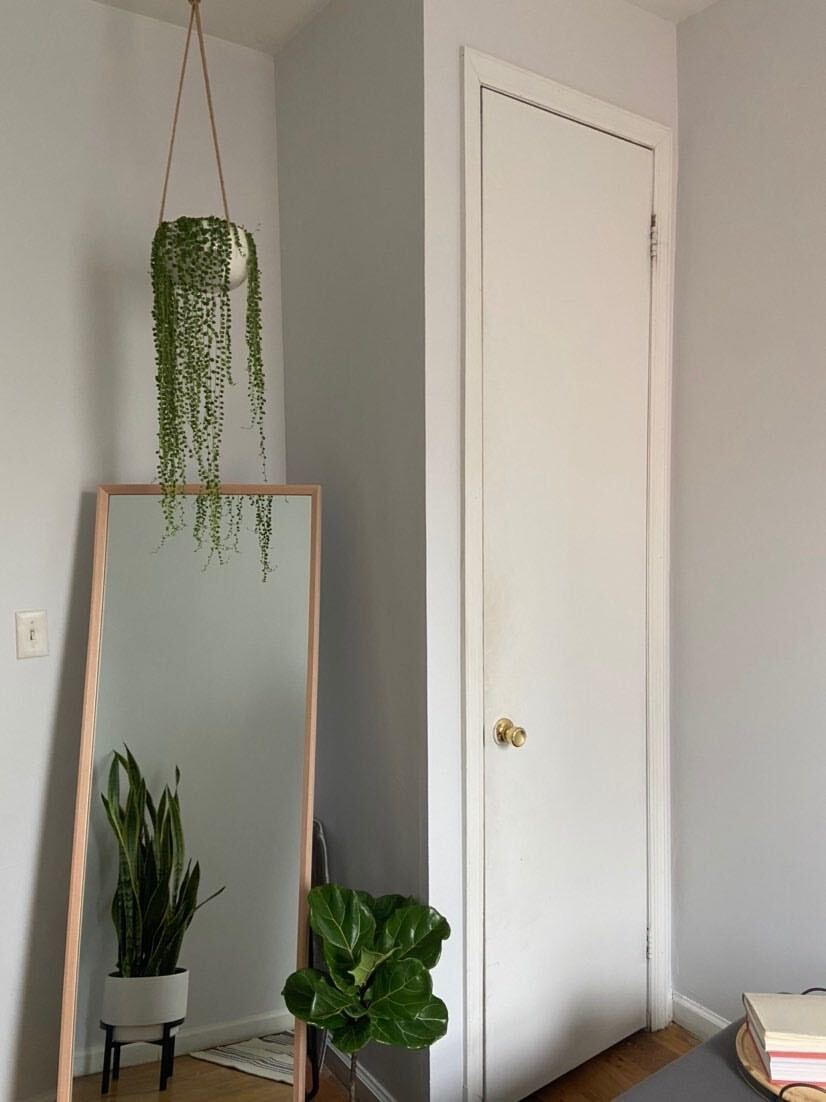 Cool gray paint in room with plant and mirror