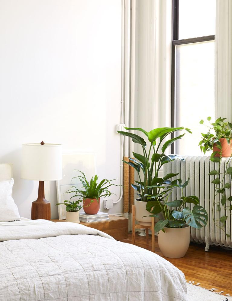 Monstera plant in bedroom with window