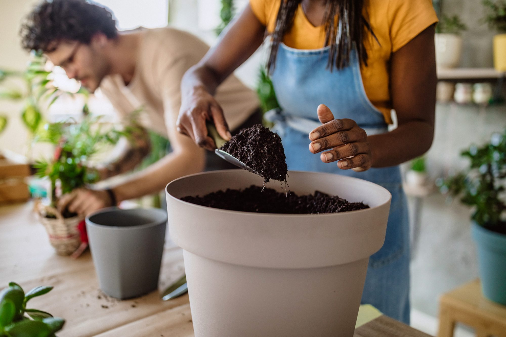 Woman repotting house plant in pot