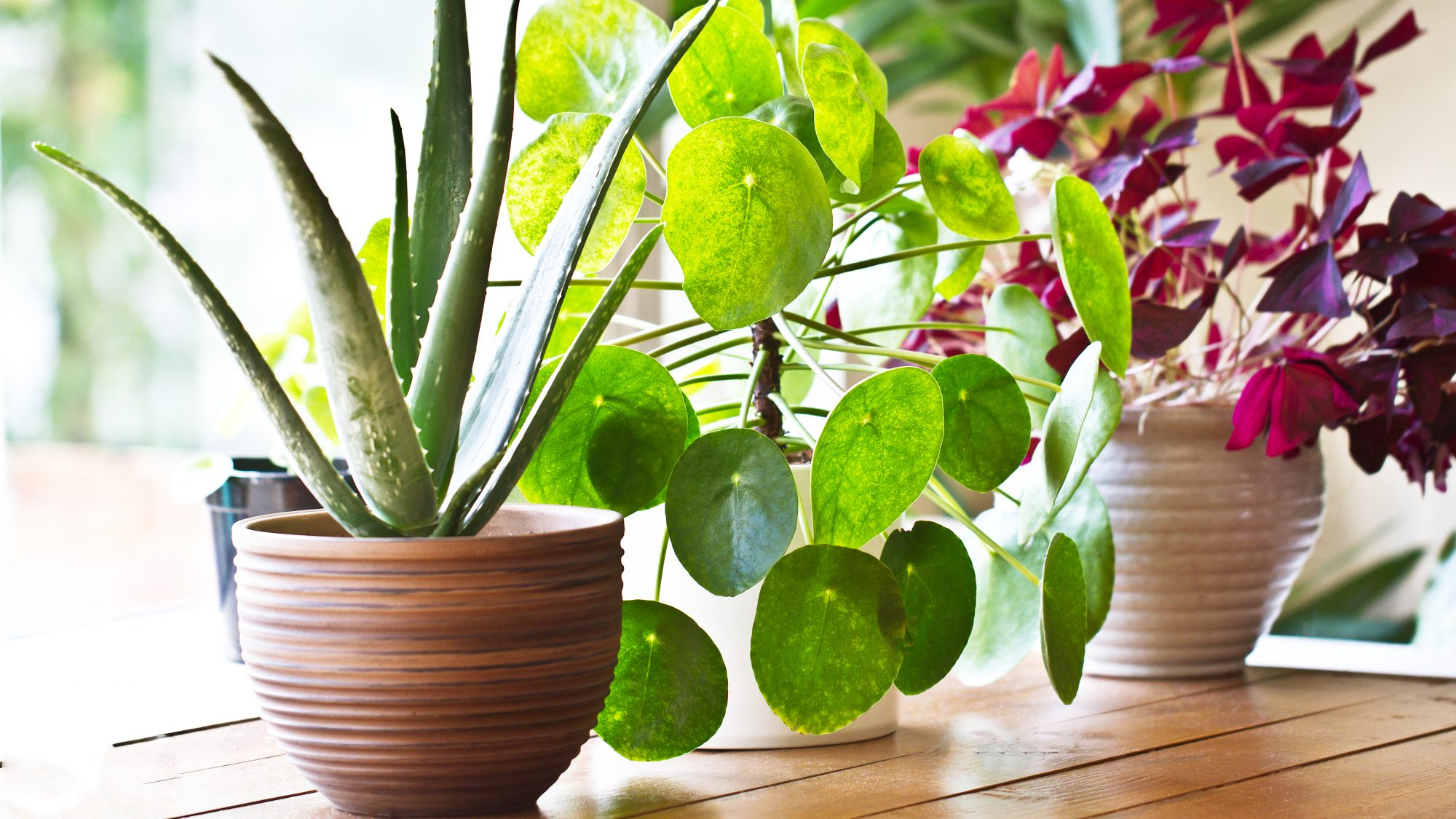 beautiful potted house plants