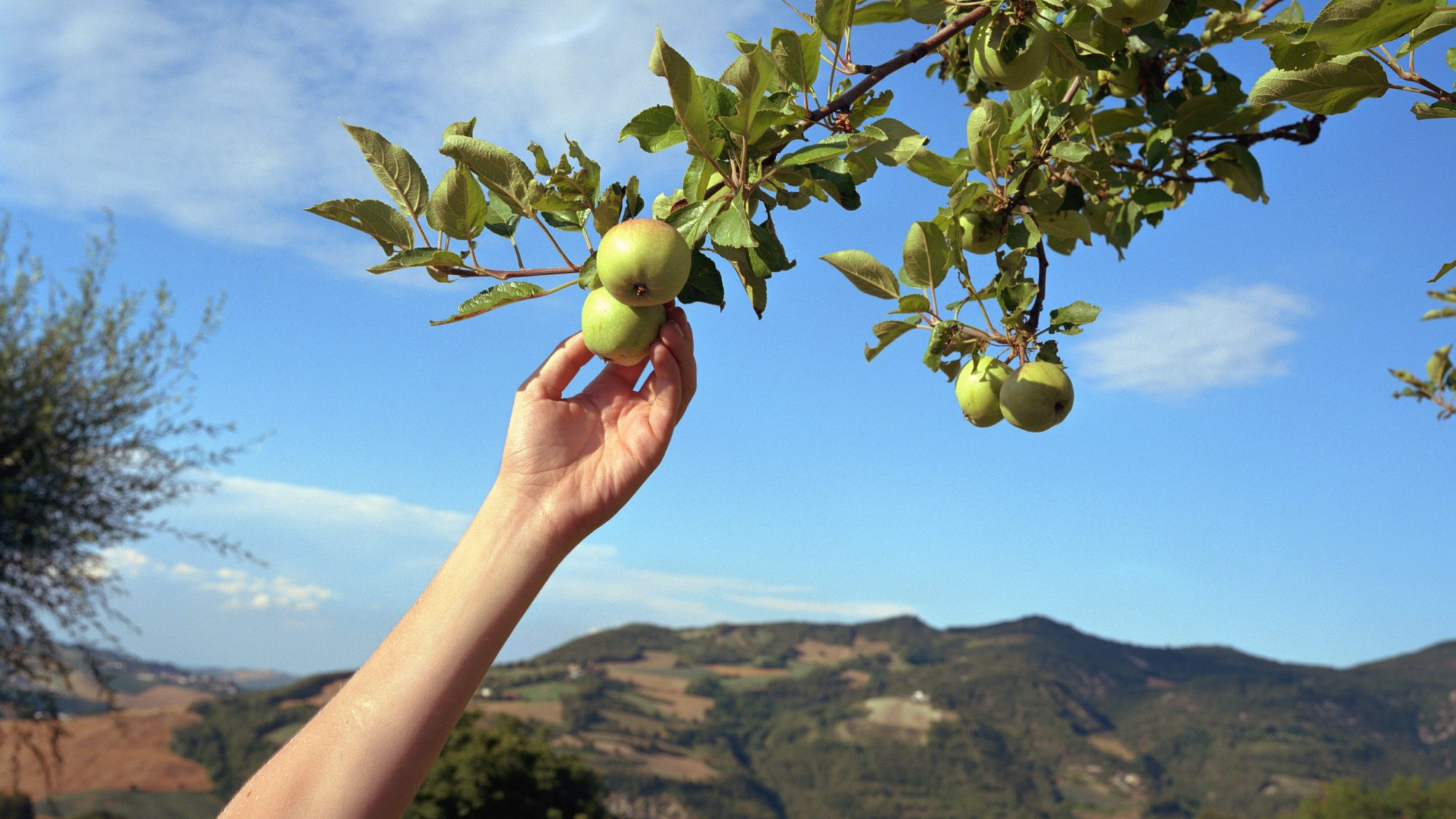 Fall activities, fun things to do in the fall during coronavirus/covid - apple picking