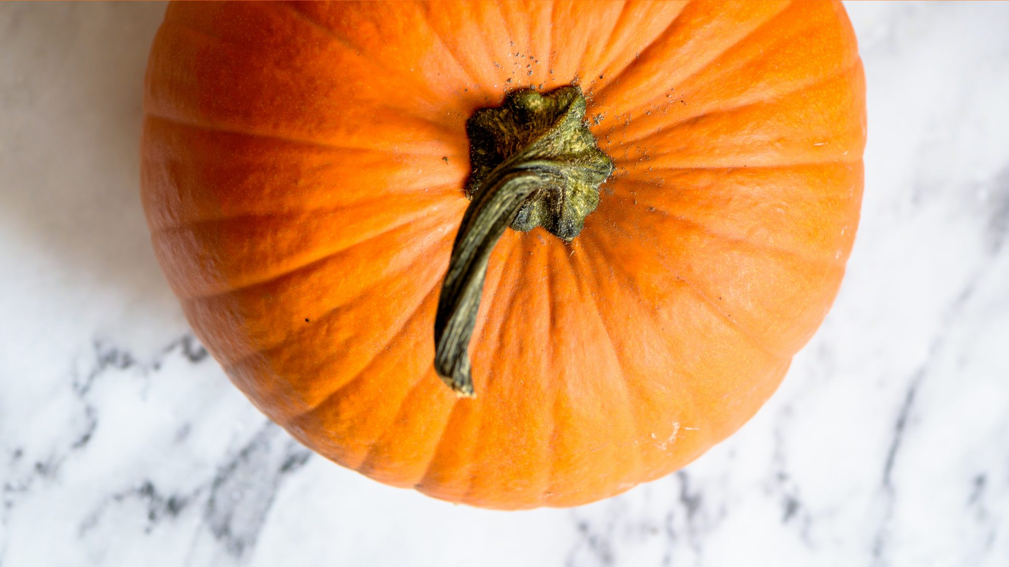 Pumpkin facts and trivia - large pumpkin