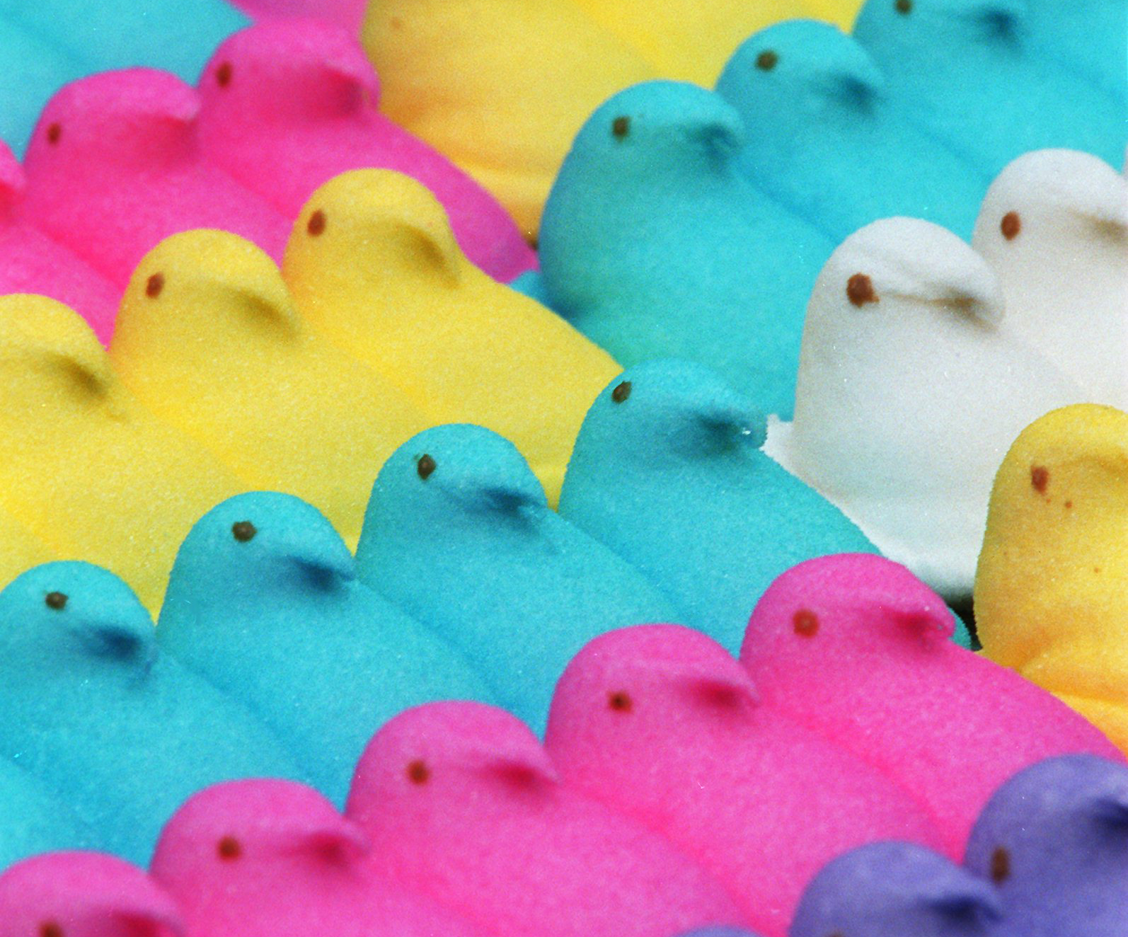 Peeps: chicks in different colors