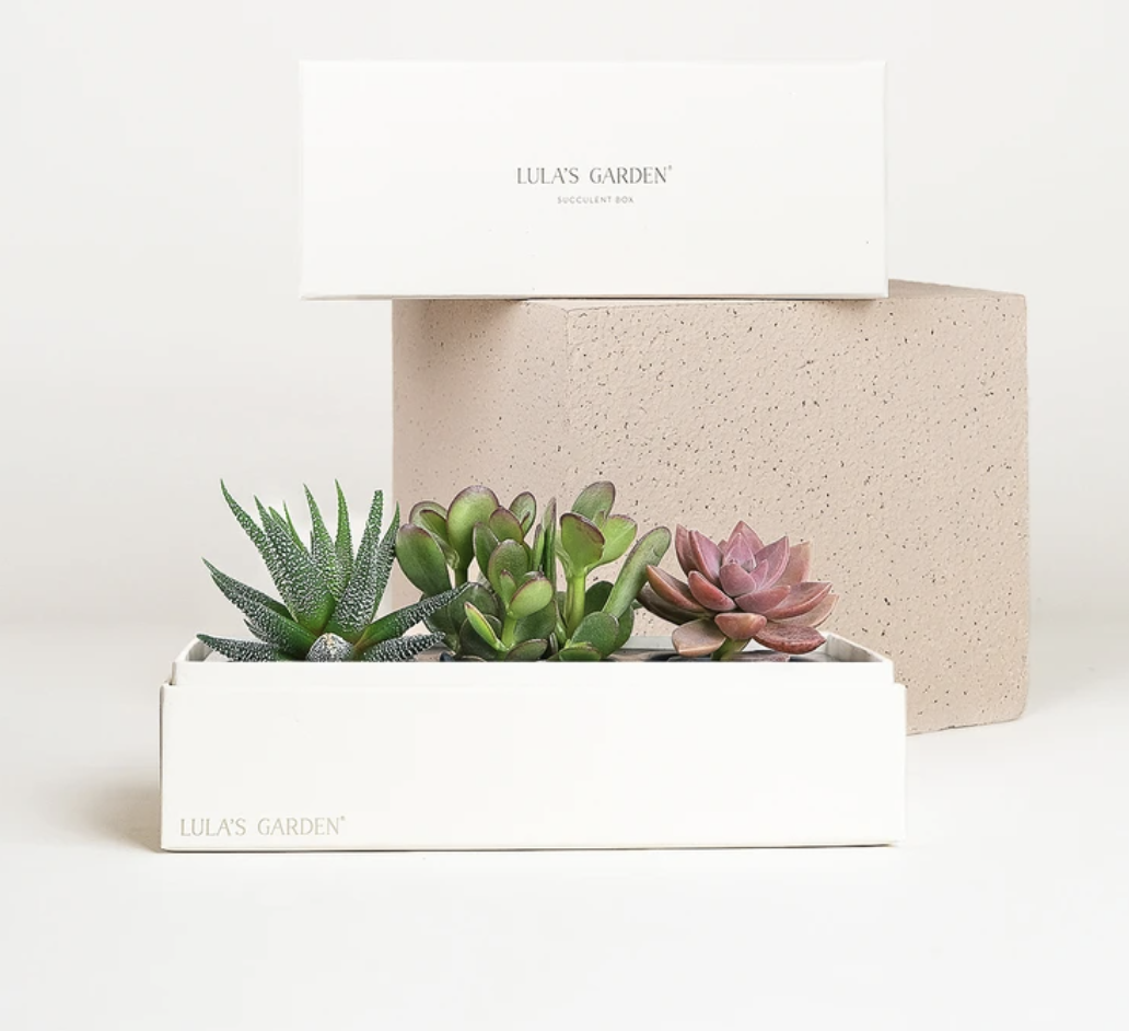 Best gifts for dads – Lulu's Garden Live Succulent Plant
