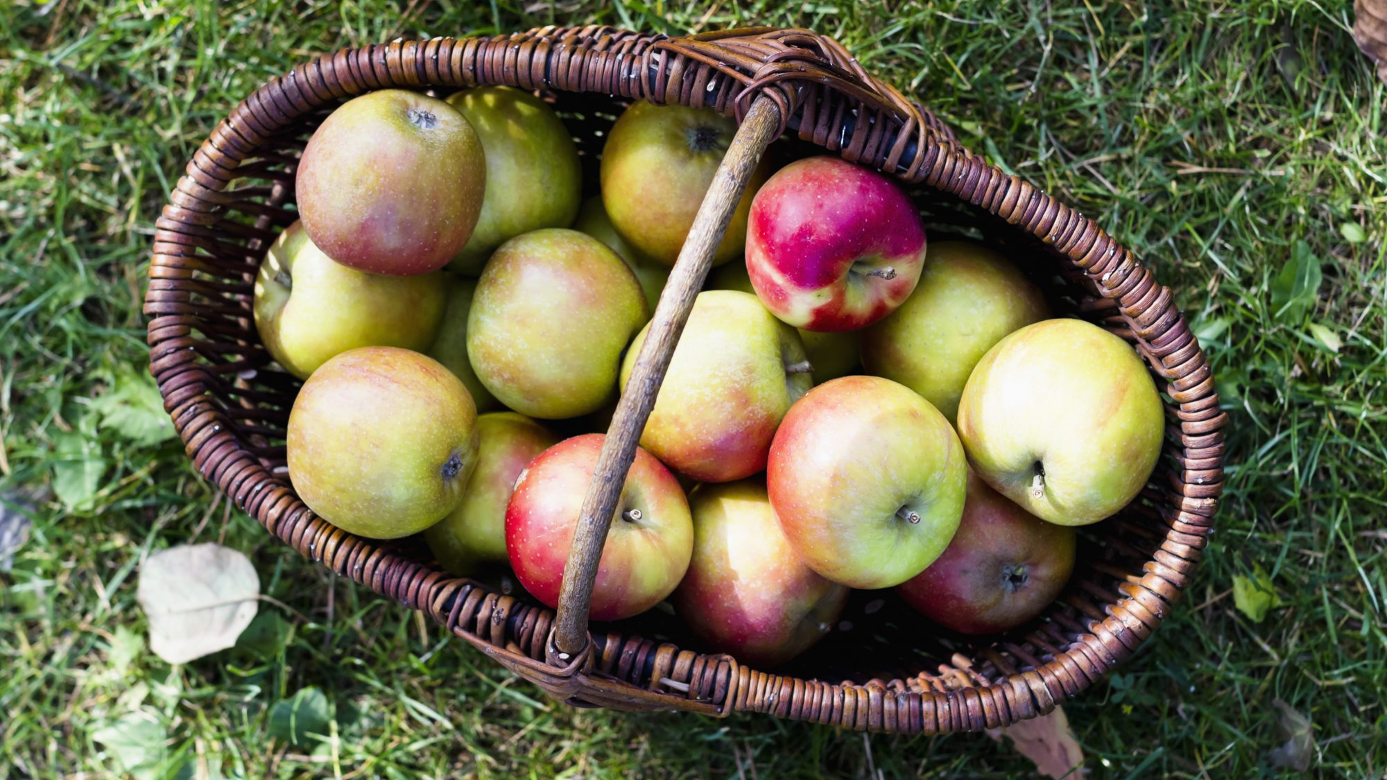 How-to-Store-Apples: basket of apples