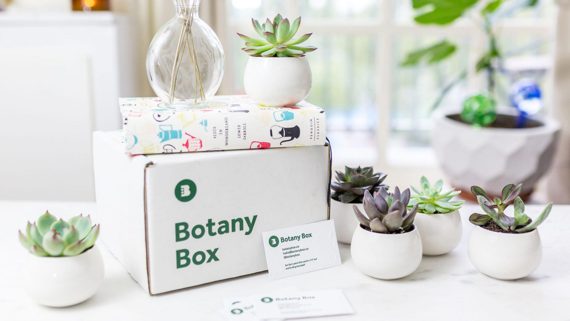 Gifts for plant lovers, plant gift ideas - Botany Box succulents
