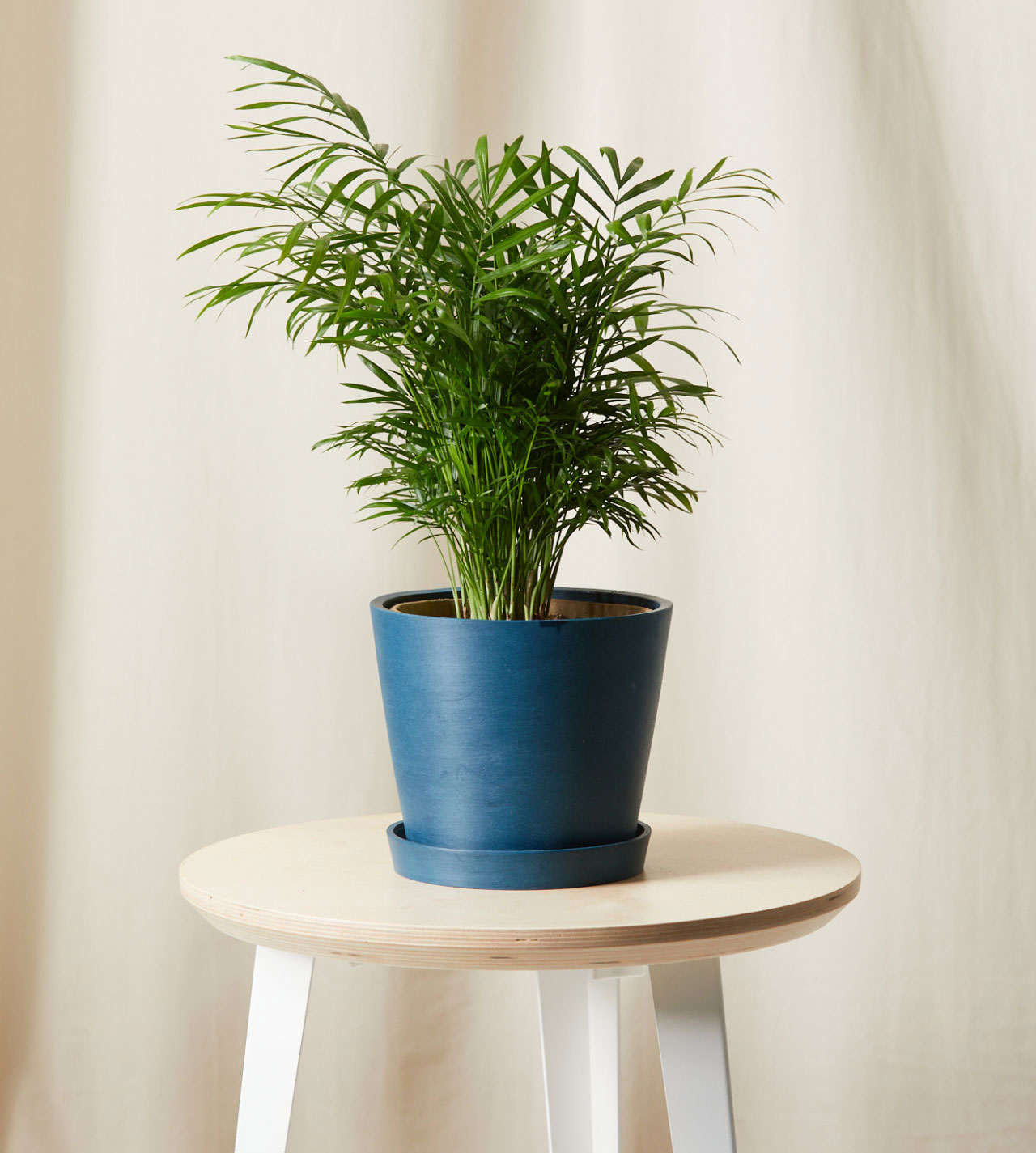 Best gifts, gift ideas for women - Bloomscape Parlor Palm