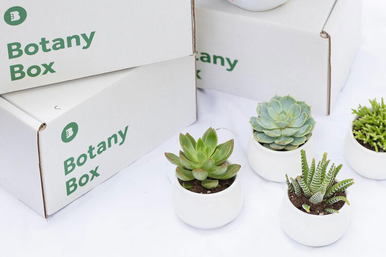 Gifts for plant lovers - Botany Box