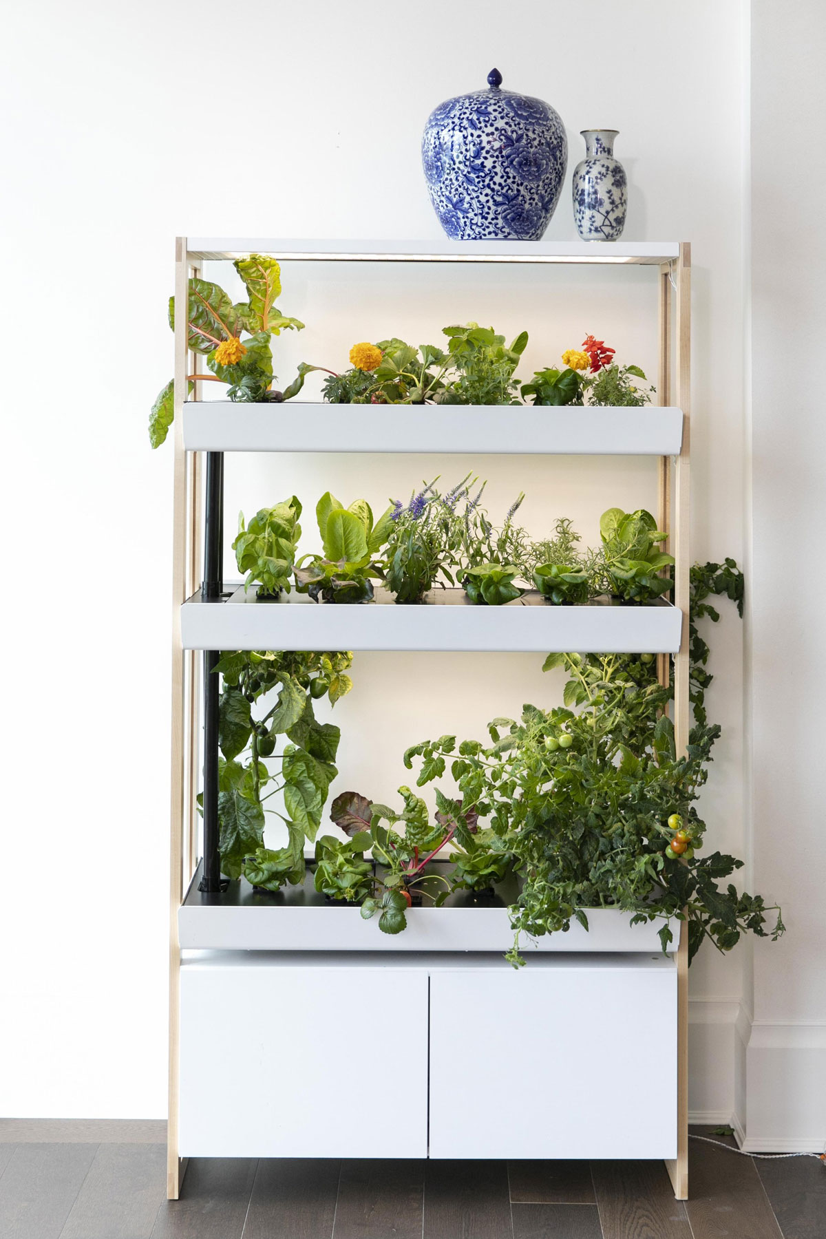 Gifts for plant lovers - Rise Indoor Garden