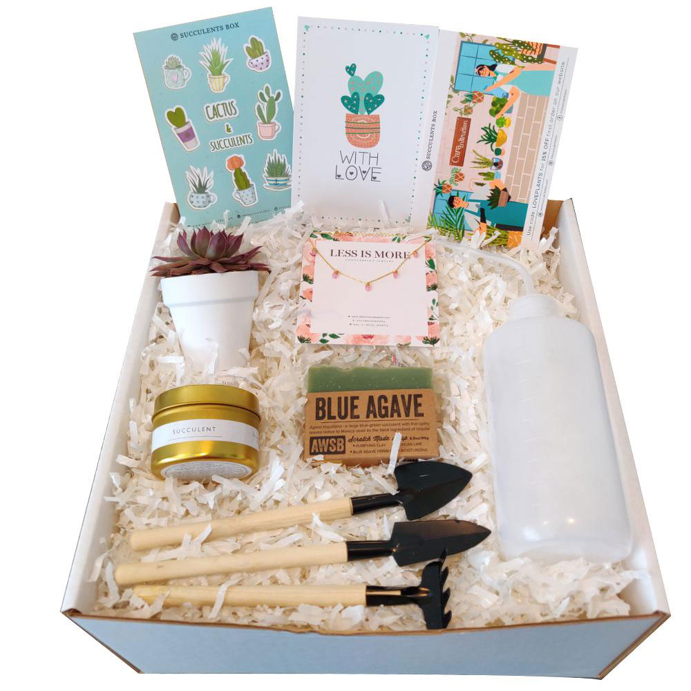 Gifts for plant lovers - Succulents Personalized Gift Box