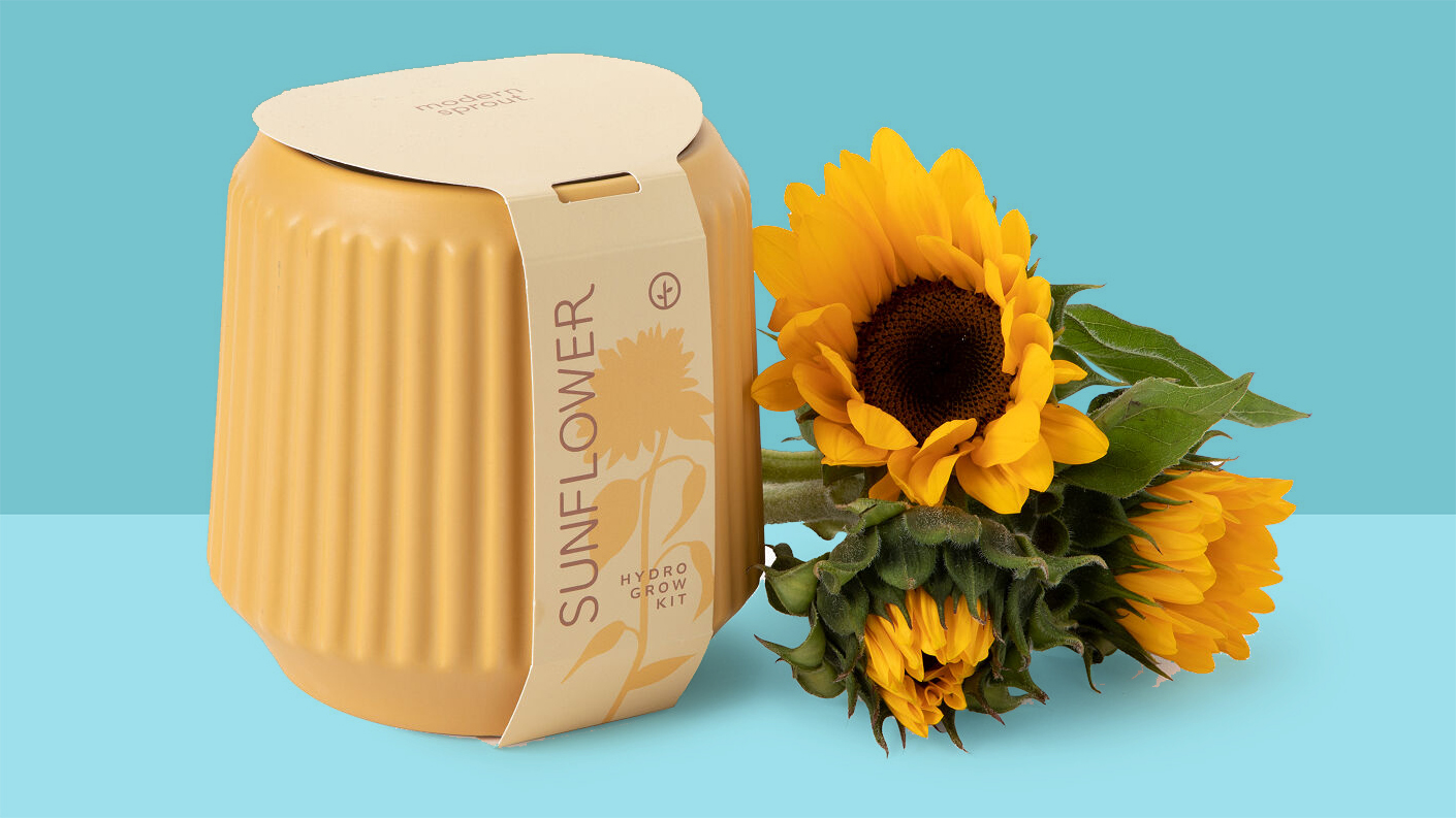 6 Clever Items (11/13/20) - Sunflower vase on blue background tout