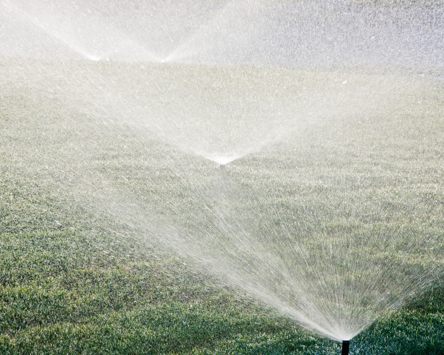 how to save water at home: water lawn in the morning or evening when it's cool out