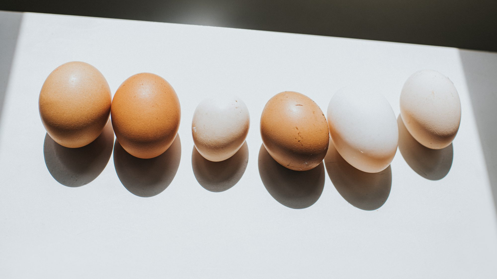 egg-size-differences