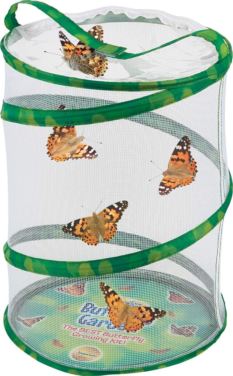 Butterfly Kit for Valentine's Day Gift for Kids